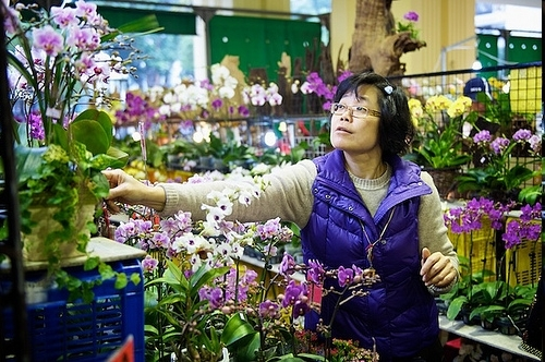 Orchids on sale in a Taiwan. The county is the world's leading grower of orchids