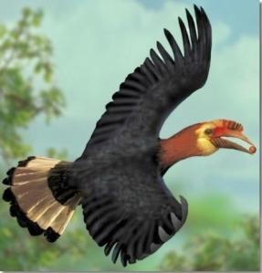 Rufous-headed hornbill - critically endangered