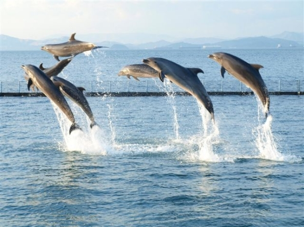 The Dolphins at Ocean Adventure
